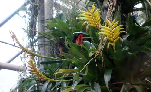 Orchideen im Gewächshaus
