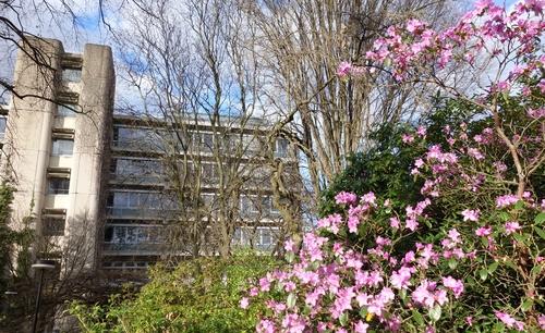 Erste Rhododendren
