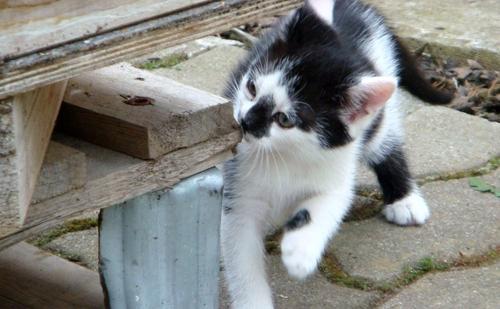 Kätzchen 2