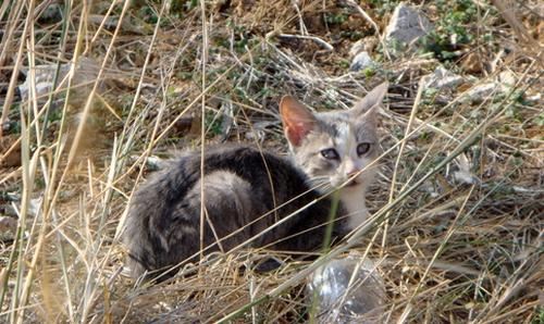 Kleine Katze aus Heraklion