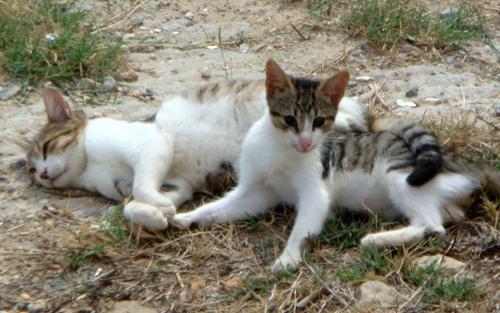 Kätzchen auf Kreta