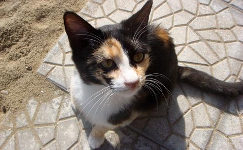 Katze aus Heraklion