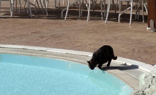 Katze am Swimmingpool