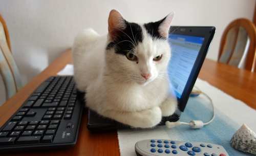Tamai auf dem Netbook