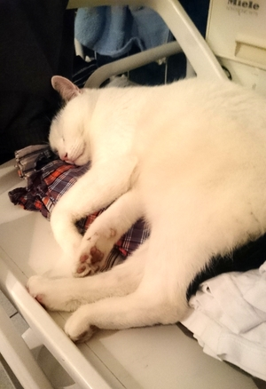 Tamai auf der Wäsche