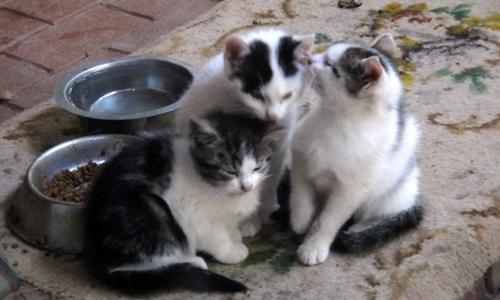 Katzenbabies