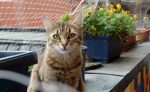 Mia auf dem Balkon