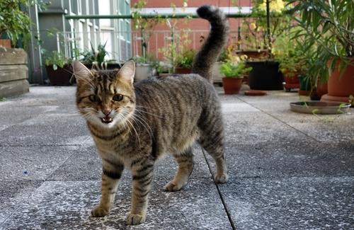 Mia auf der Terrasse