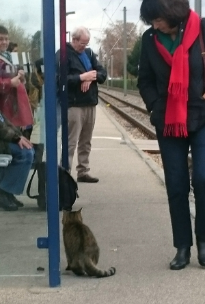 Katze an der Haltestelle