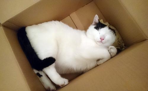 Tamai in der Kiste