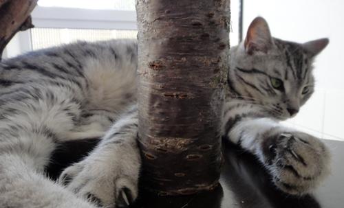 Whiskas-Katze