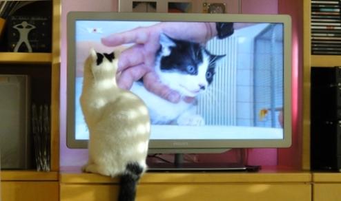 Tamai vor dem TV-Gerät