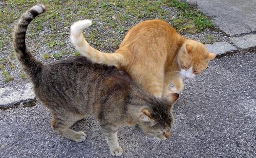 Schwarzweisse Katze