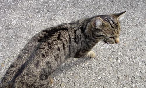 Katze umkreist Rolli
