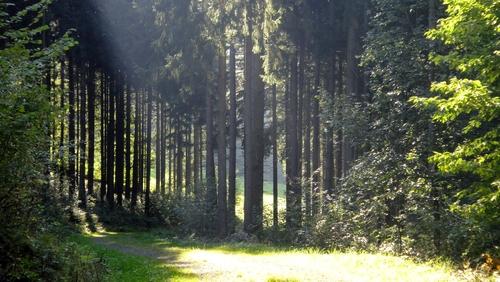 Lichtung im Schwarzwald
