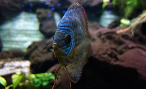 Fisch im Pflanzenschauhaus