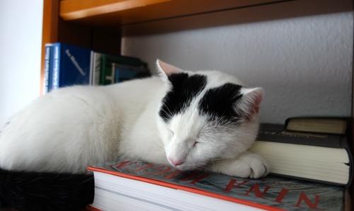 Tamai schäft auf einem Buch