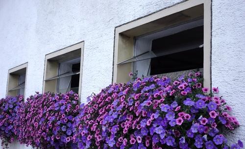 Fenster eines Kuhstalls