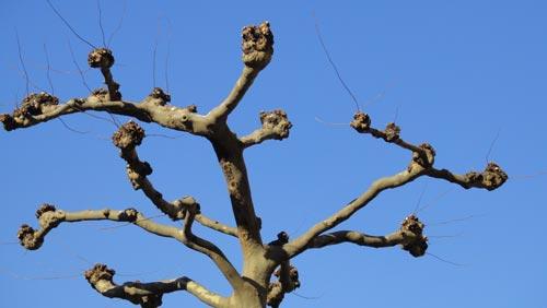 Himmel mit Baum