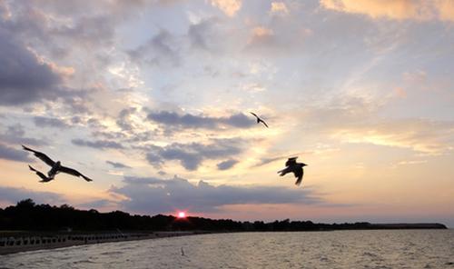 Himmel mit Möwen und Krähe