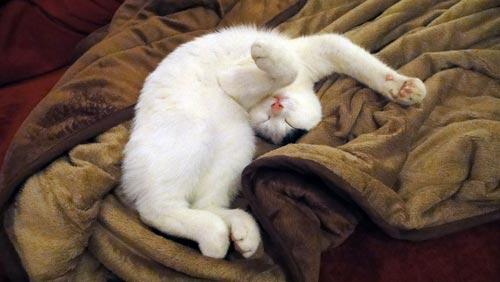 Tamai schlafend auf der Decke