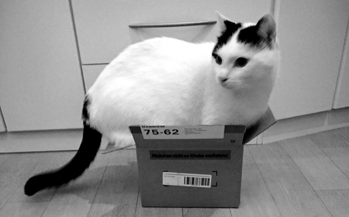 Katze im Kartion