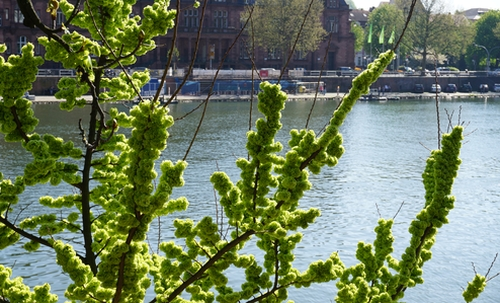 Frisches Grün am Baum
