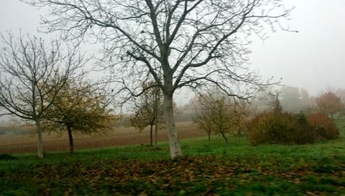 Natur im Nebel
