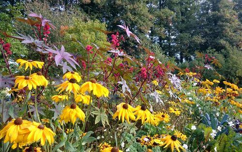 Blumenrabatte auf der LaGa 2016