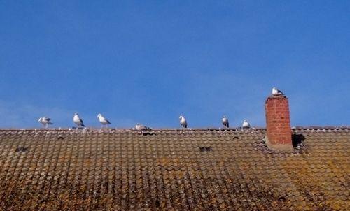 Möwen auf dem Dach