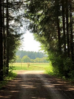 Im Tannenwald