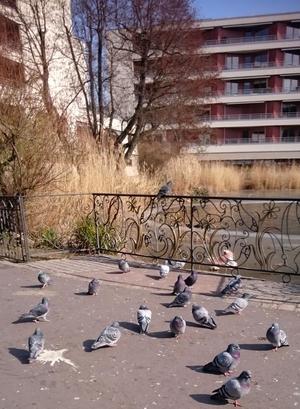 Tauben im Park