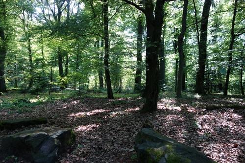 Heidelberg Wald
