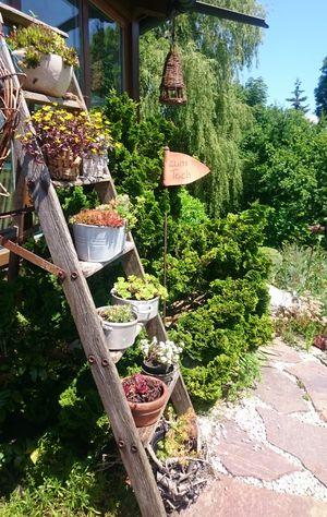 Treppe mit Dickblattgewächsen