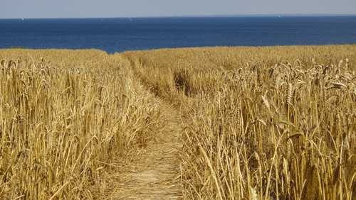 Felder an der Steilküste