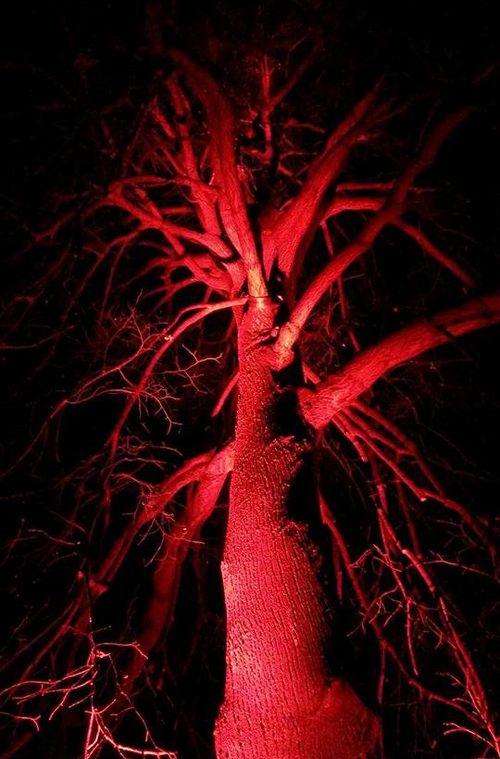 Rot angestrahlter Baum in der Nacht