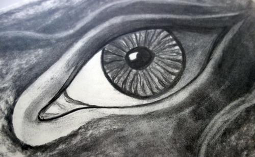 Auge - Kohlezeichnung (c) Riegler