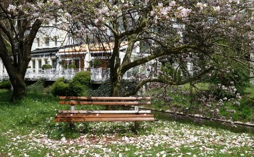 Bank unter einem Magnolienbaum