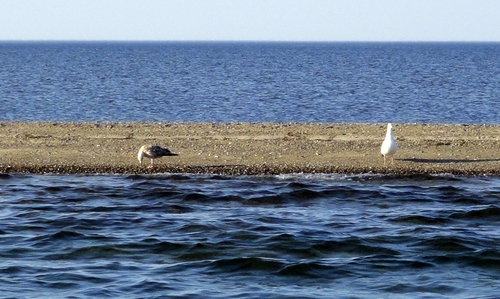 Sandbank Lieps