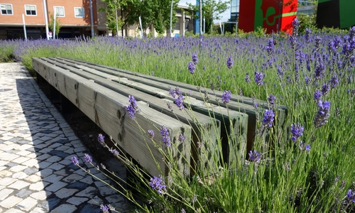 Holzbank mit Lavendel