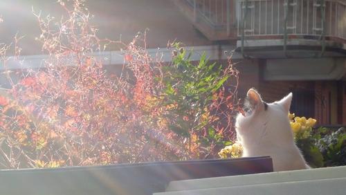 Tamai in der Sonne