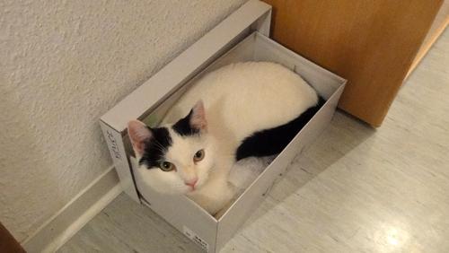 Tamai in seinem Schuhkarton
