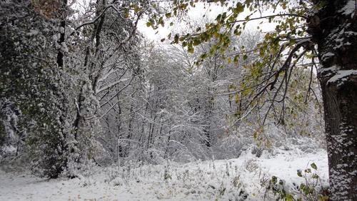Laubwald im Schnee