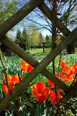 Tulpen im Kurpark
