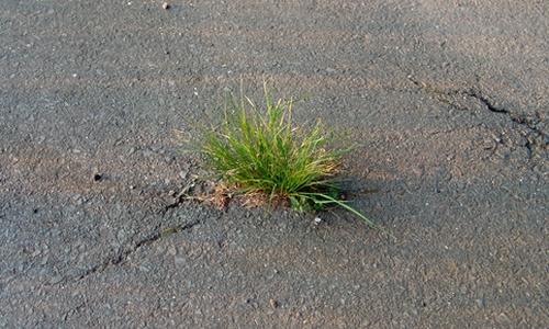 Gras bricht durch Teerboden