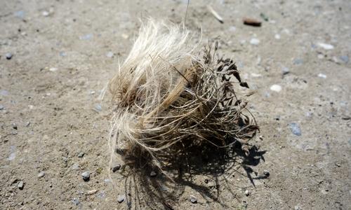 Samen auf dem Boden