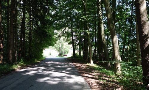Waldweg bzw. -strasse