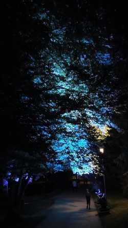 Illuminierter Bäume im Kurpark