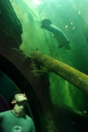 Marius unter dem großen Becken